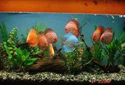 راه اندازی شغل تولید آکواریوم و پرورش ماهی
